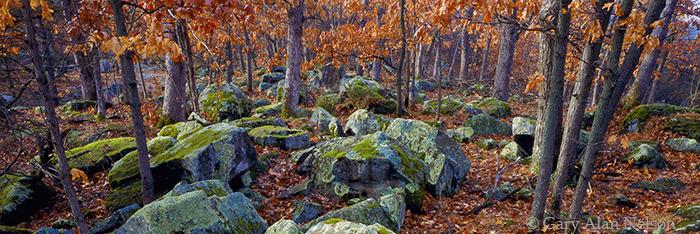 oaks, boulders, wisconsin, photo