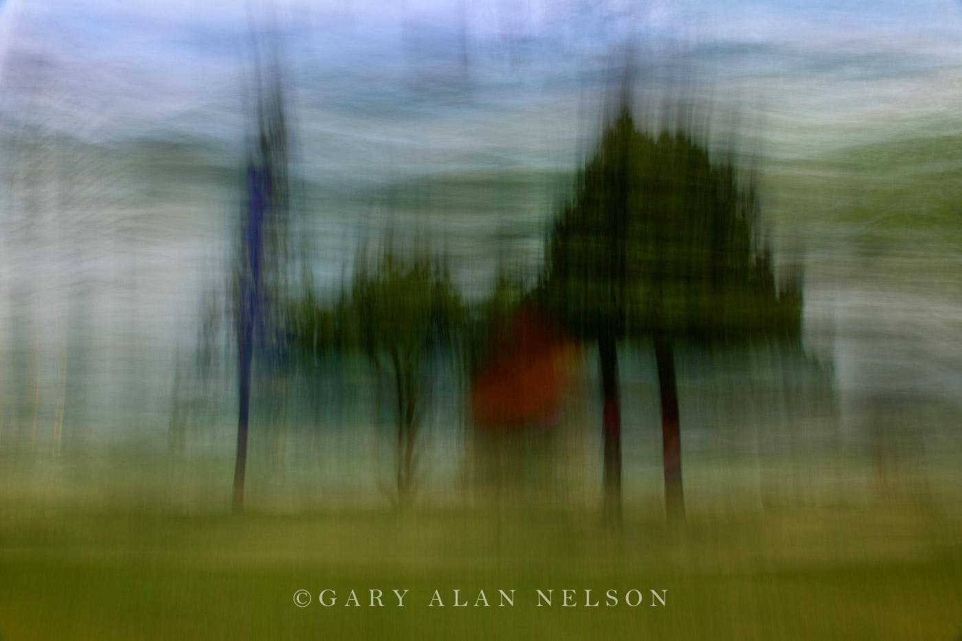 Five Trees in a Breeze - AC261