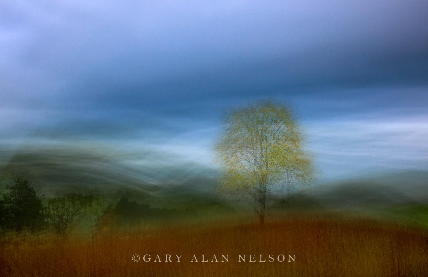 Autumn Tree under Storm - AC288