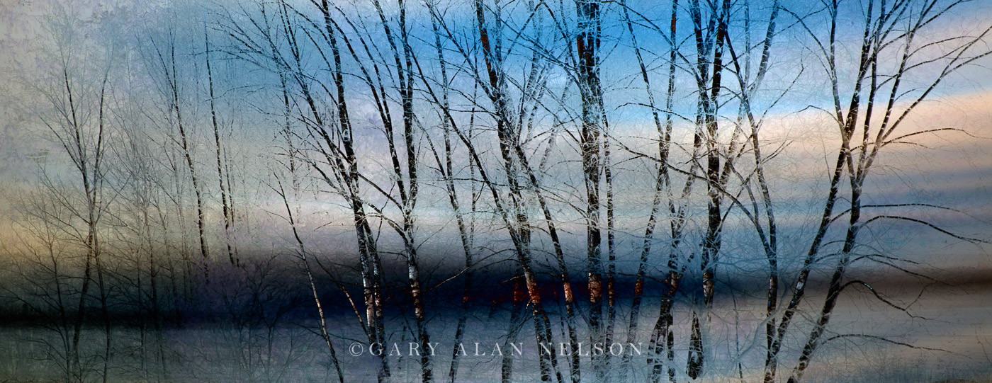Bare Branches along River - AC344