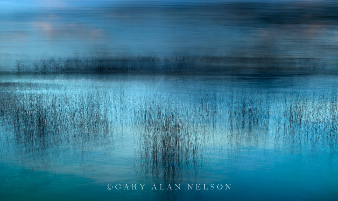 Blues and Bulrushes - AC364
