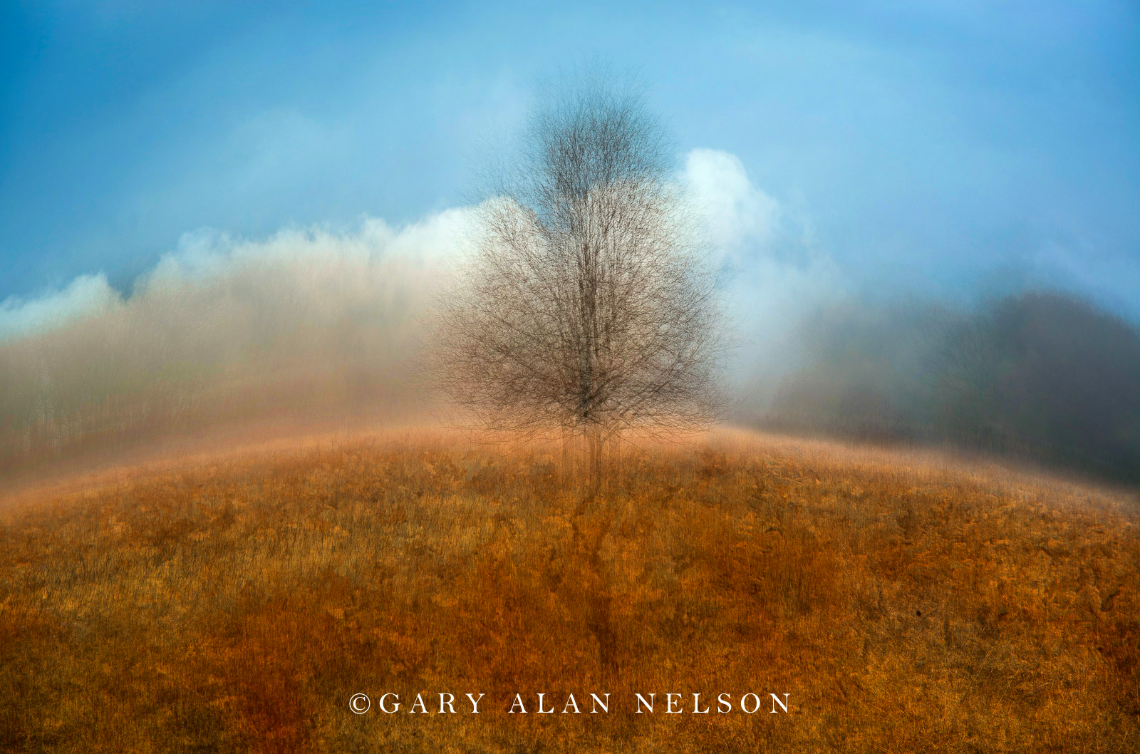 clouds, fog, inspirational, trees, photo