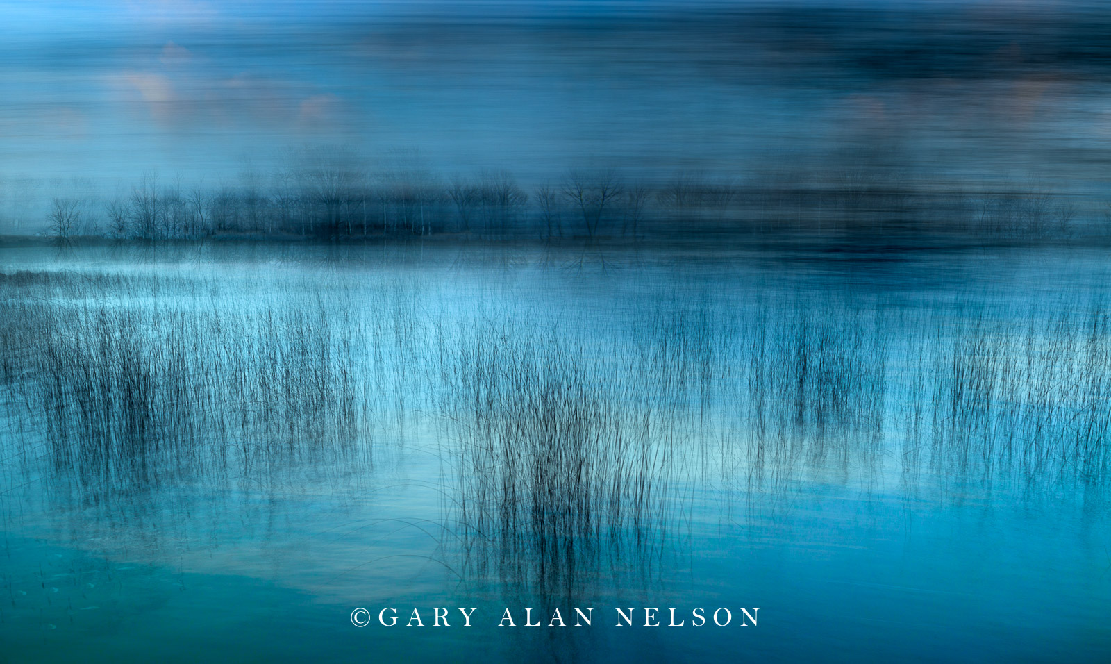 Blues and Bulrushes