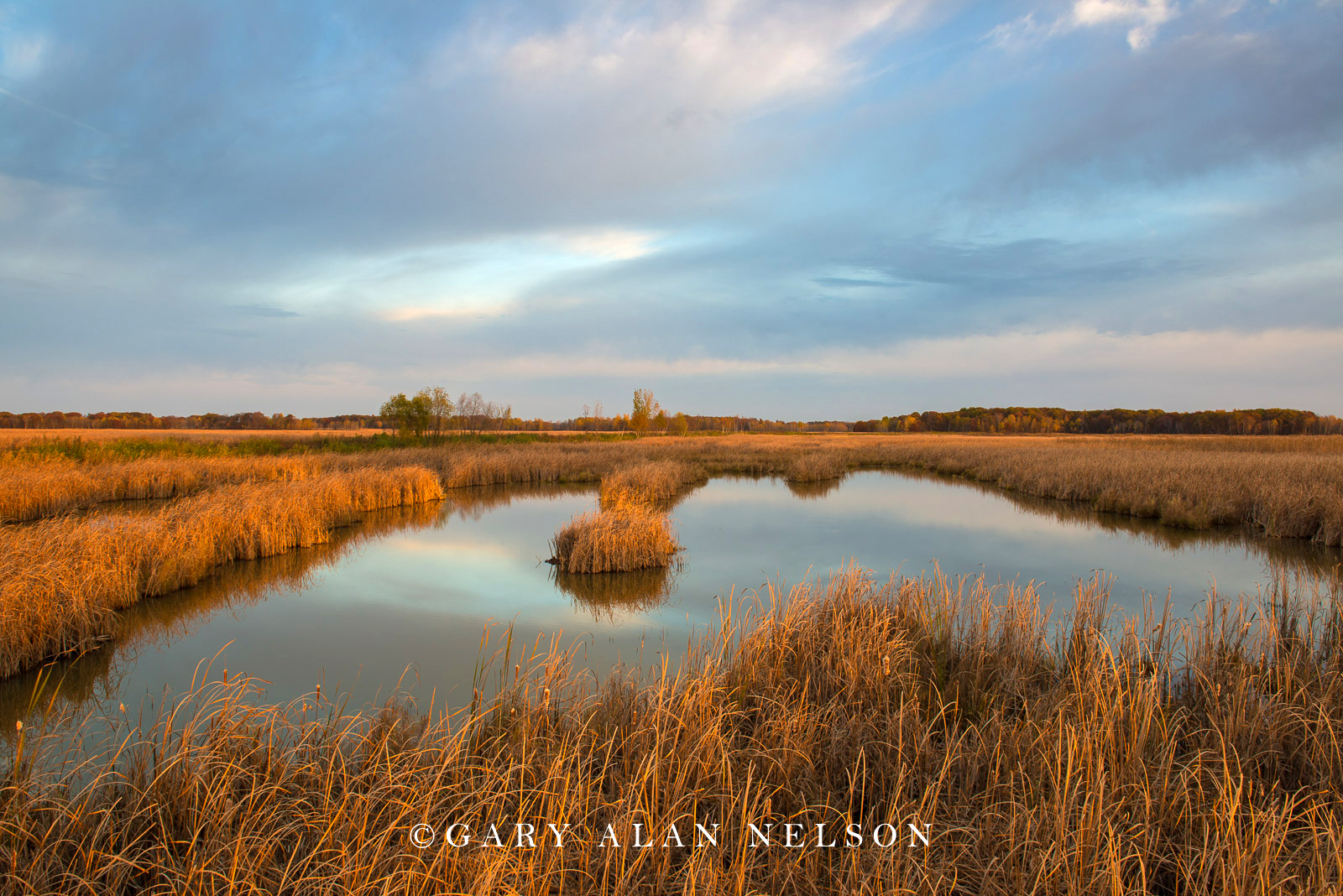 Carlos Avery, cattail marsh, minnesota, wildlife management area, photo