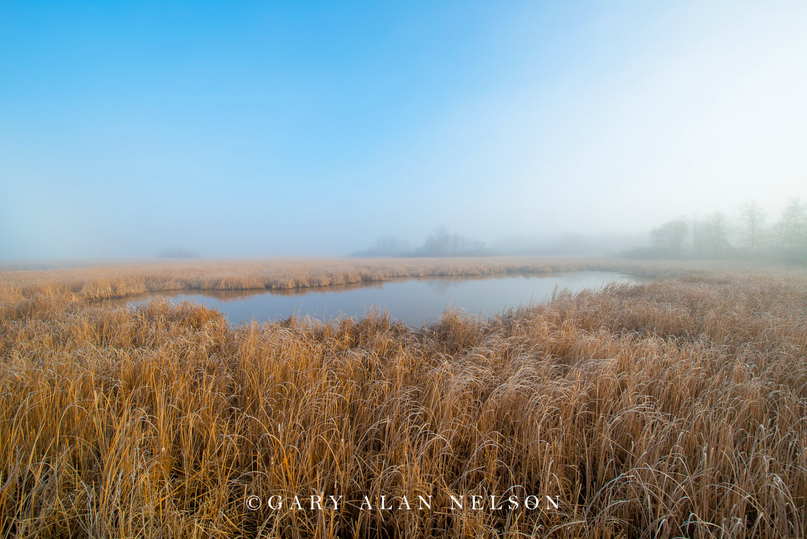 Fog over cattail marsh, Carlos Avery State Wildlife Management Area, Minnesotsa