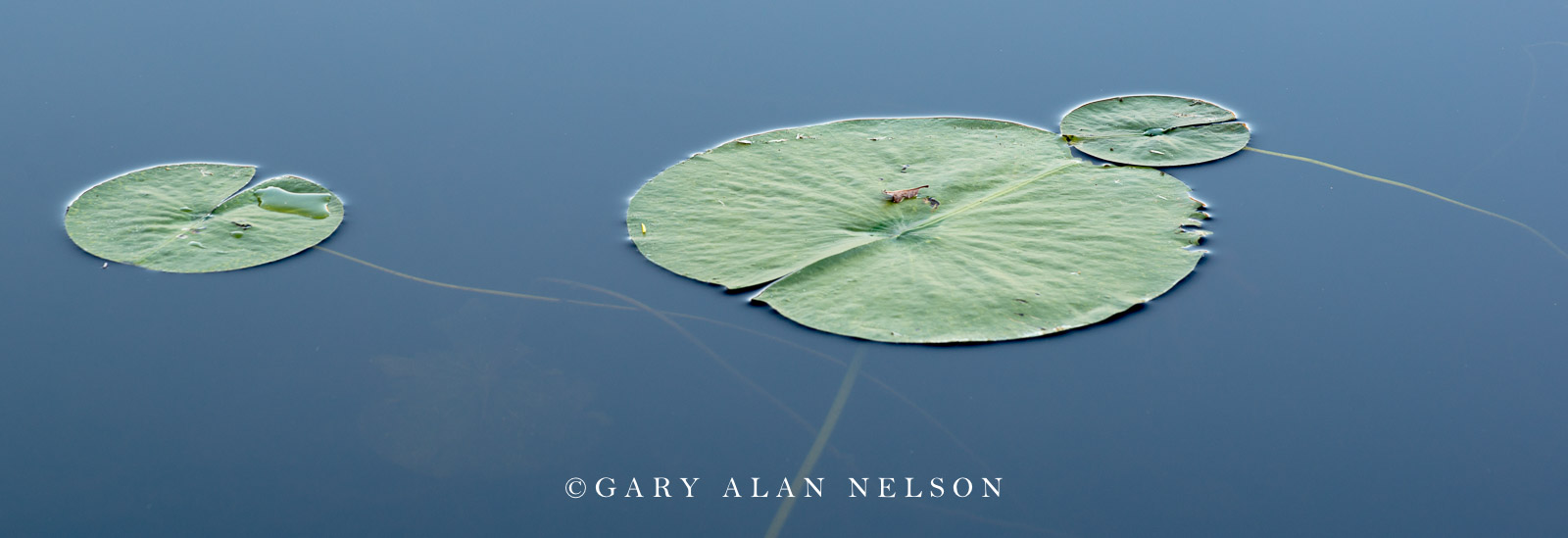 Allemansratt, blue, calm, green, lily pads, reflections, water, photo