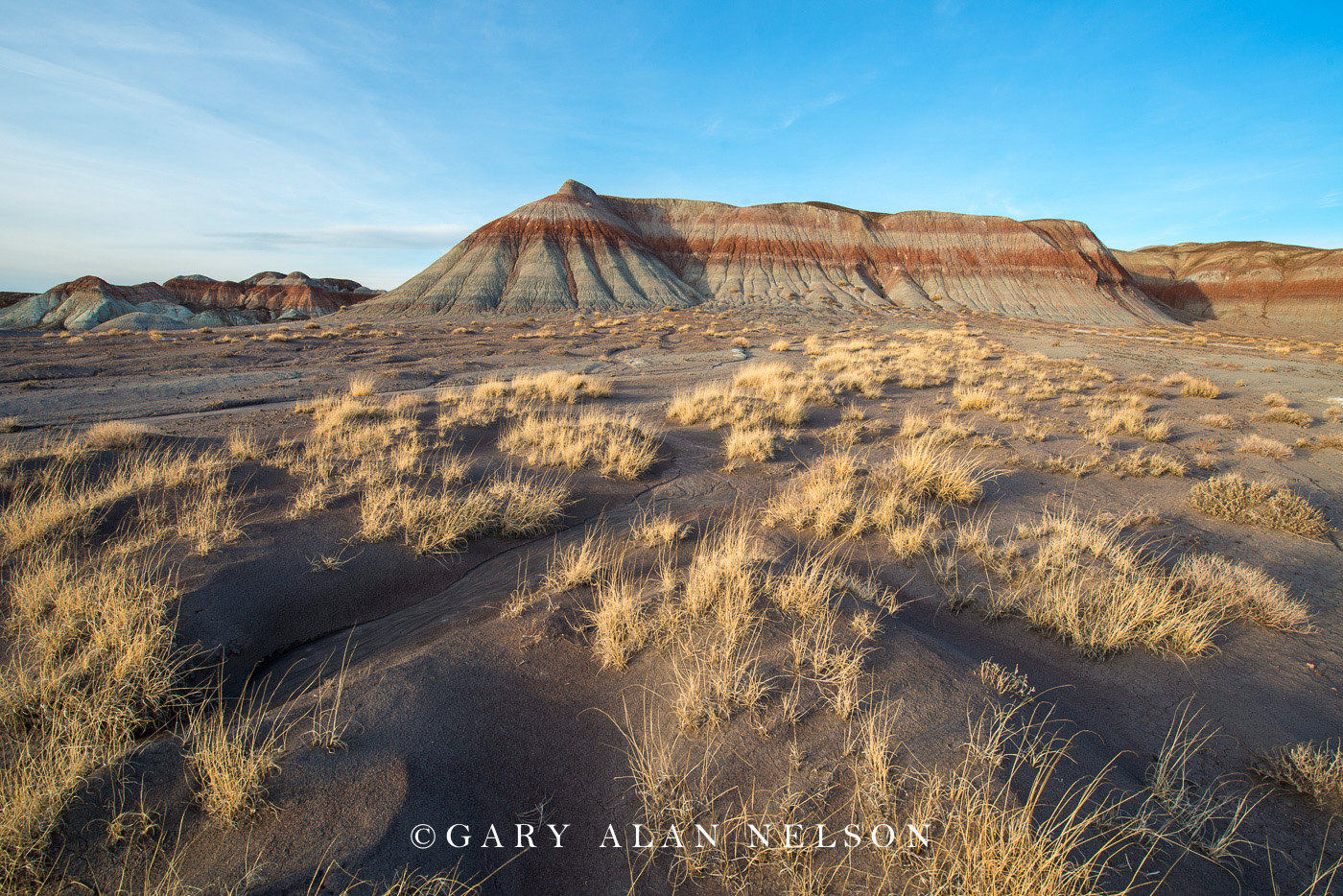 badlands, arizona, petrified forest, prairie grasses, national park, photo