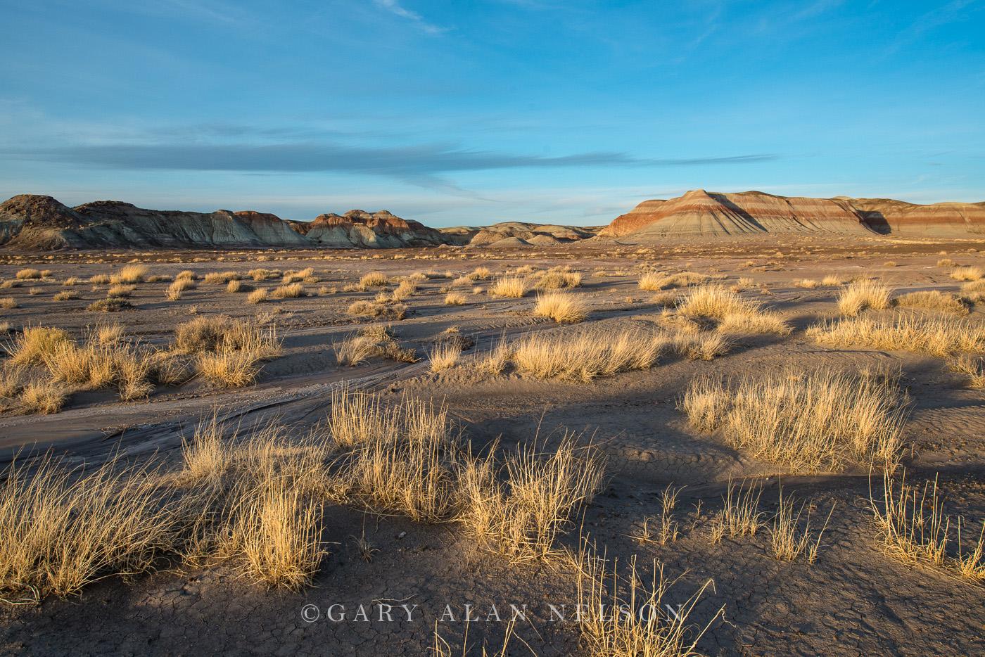 badlands, arizona, petrified forest, prairie grasses, national park, photo