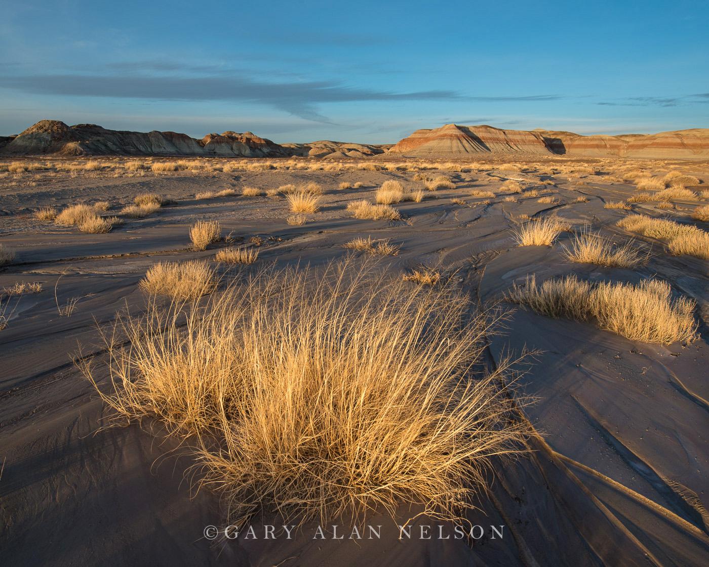 Petrified Forest National Park, national park, arizona, badlands, prairie grasses, photo