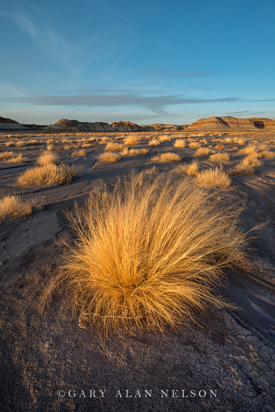 Badland formations and prairie grasses at Petrified Forest National Park, Arizona