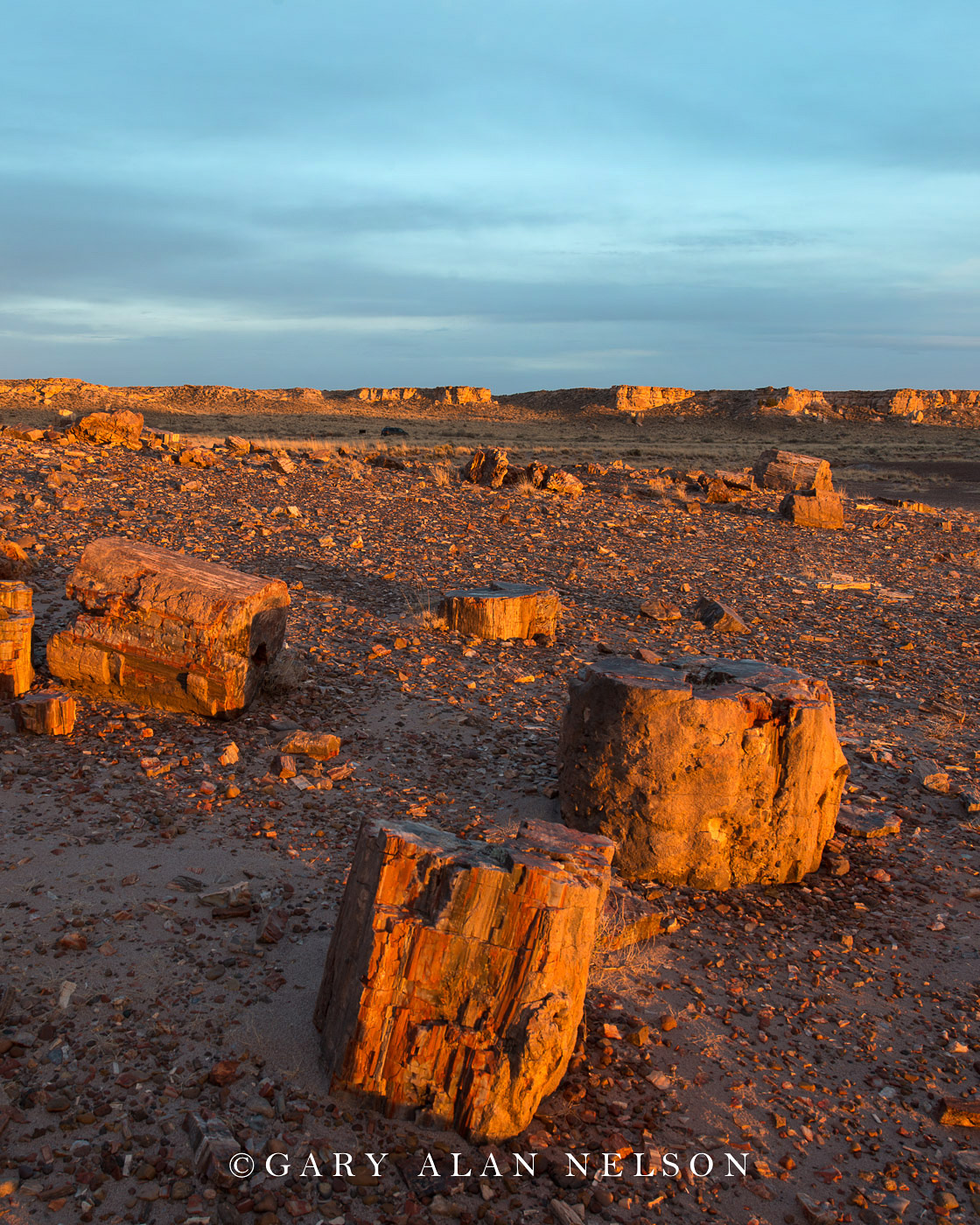Petrified Forest National Park, national park, arizona, petrified wood logs, photo
