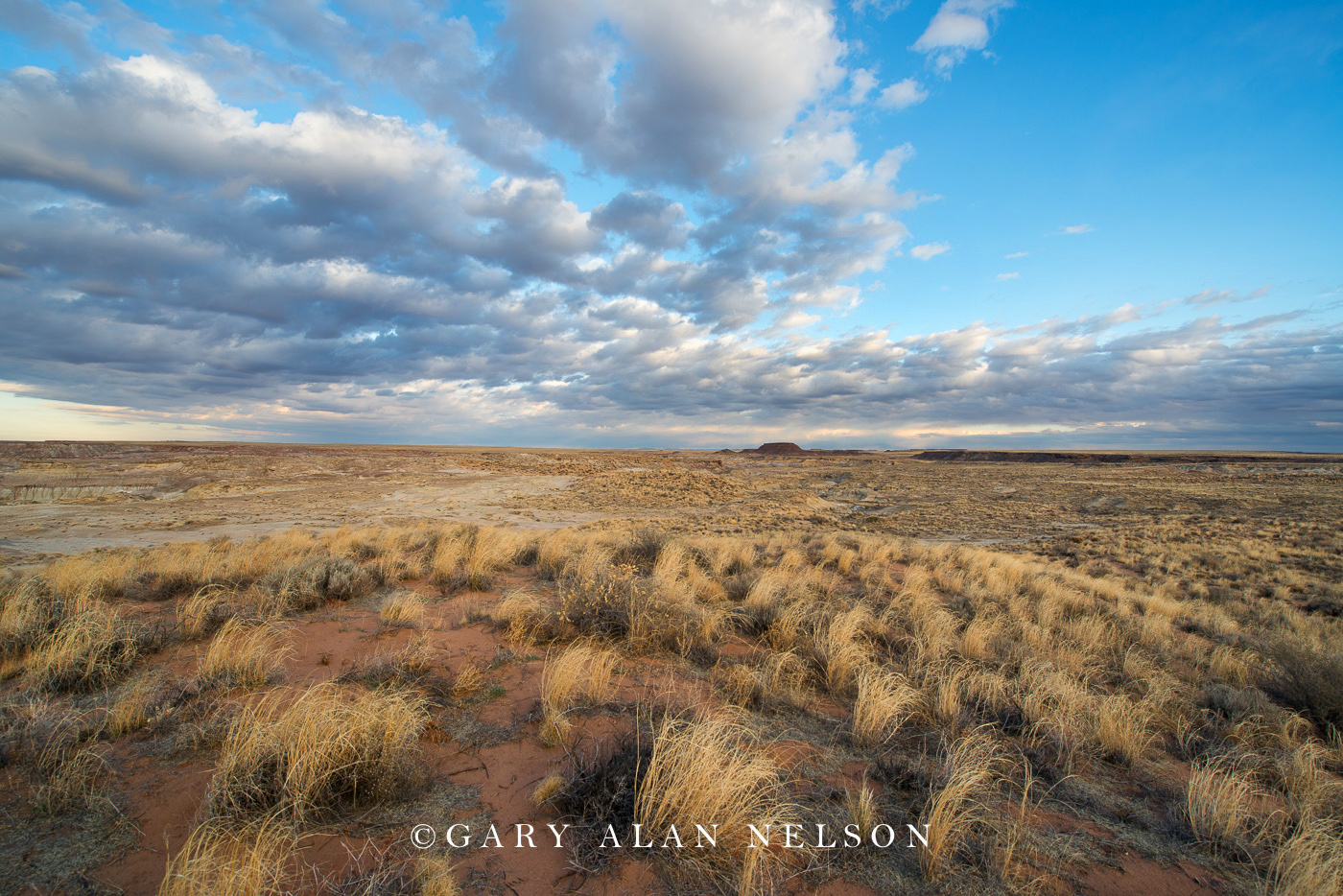 Petrified Forest National Park, national park, arizona, prairie grasses, sky, photo