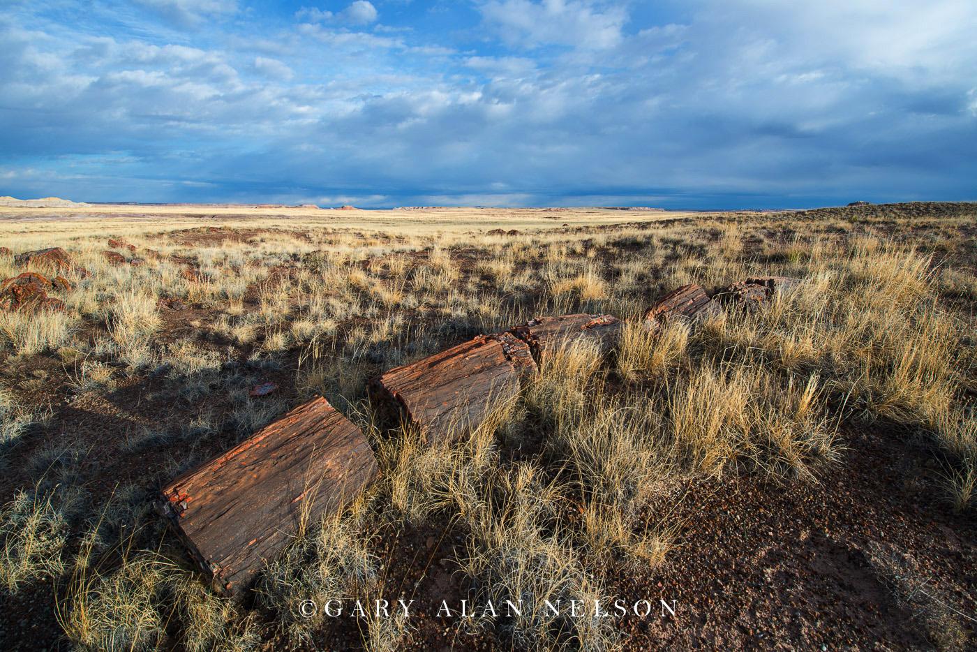 prairie grasses, petrified wood, petrified forest national park, national park, arizona, photo