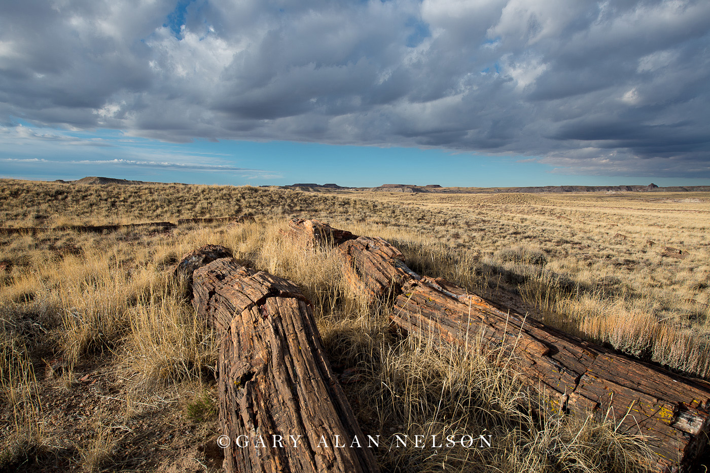 prairie grasses, petrified wood, petrified forest national park, national park, arizona, photo