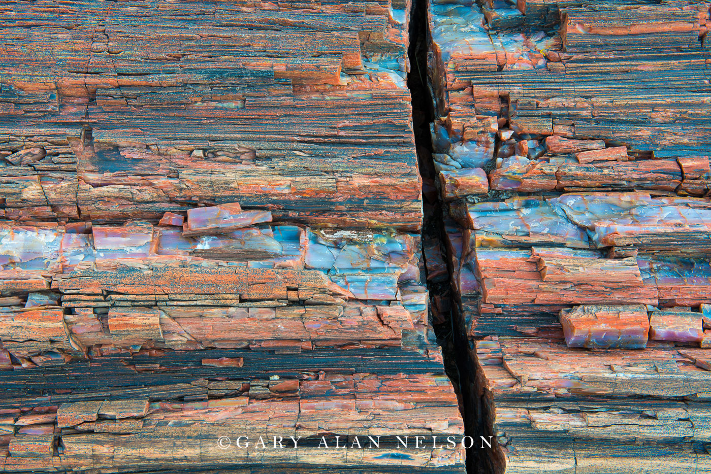 petrified wood, petrified forest national park, national park, arizona, photo