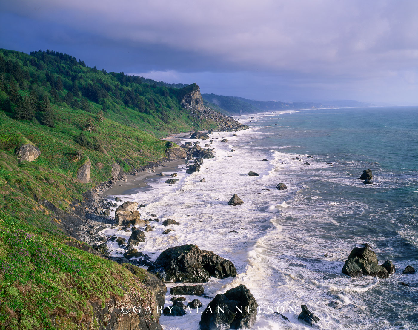 Redwoor National Park, California, pacific coast, photo