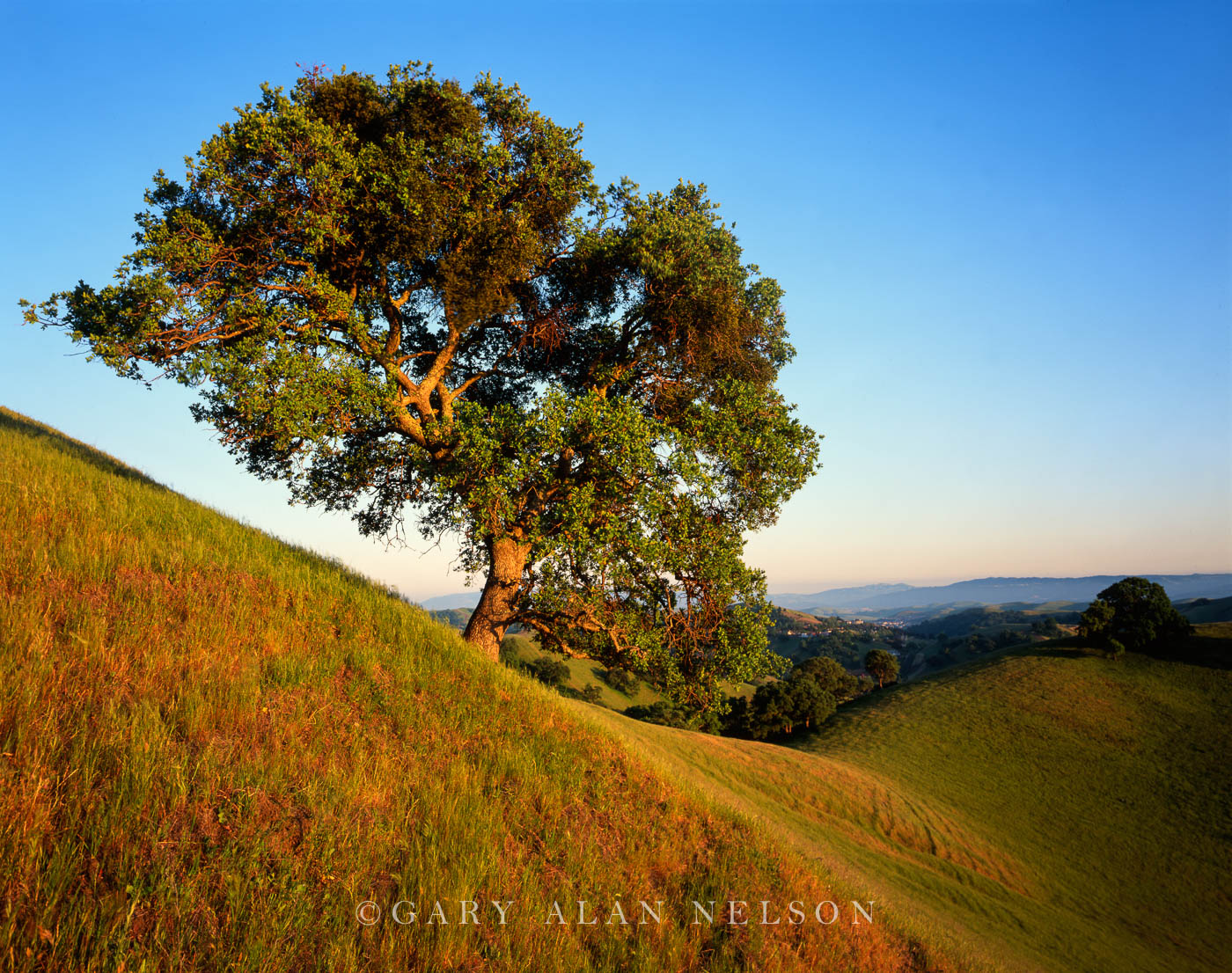 Mount Diablo State Park, California, oak tree, photo