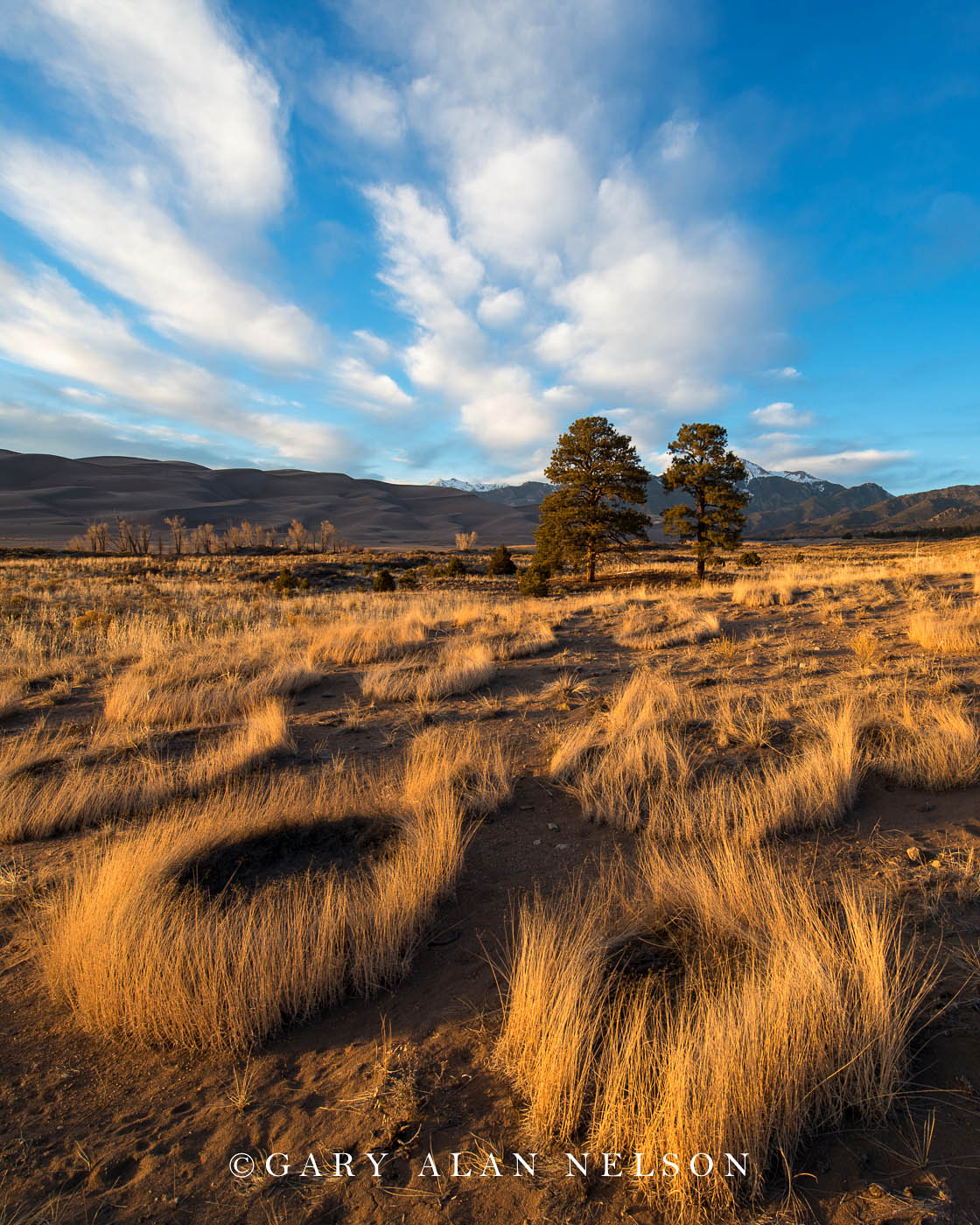 prairie grass, national park, colorado, great sand dunes, photo