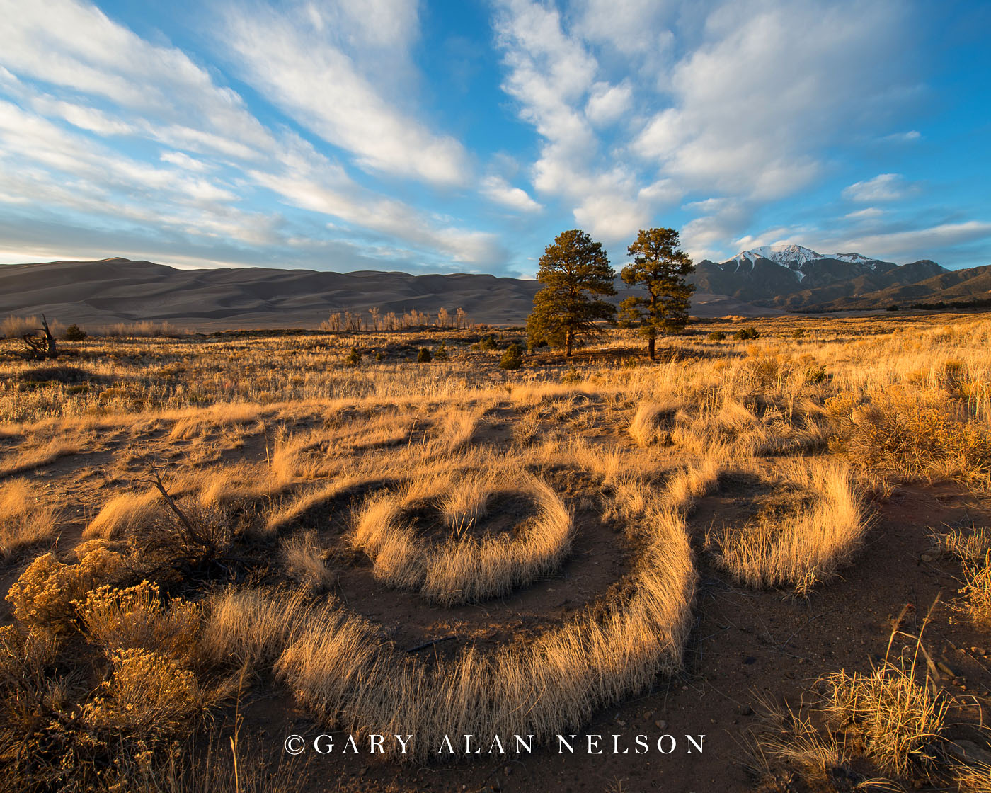 prairie grass, national park, colorado, great sand dunes, photo