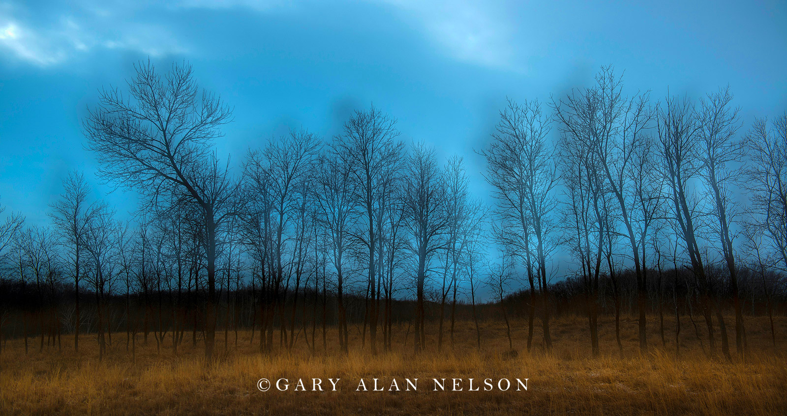 abstract, multiple exposure, tree