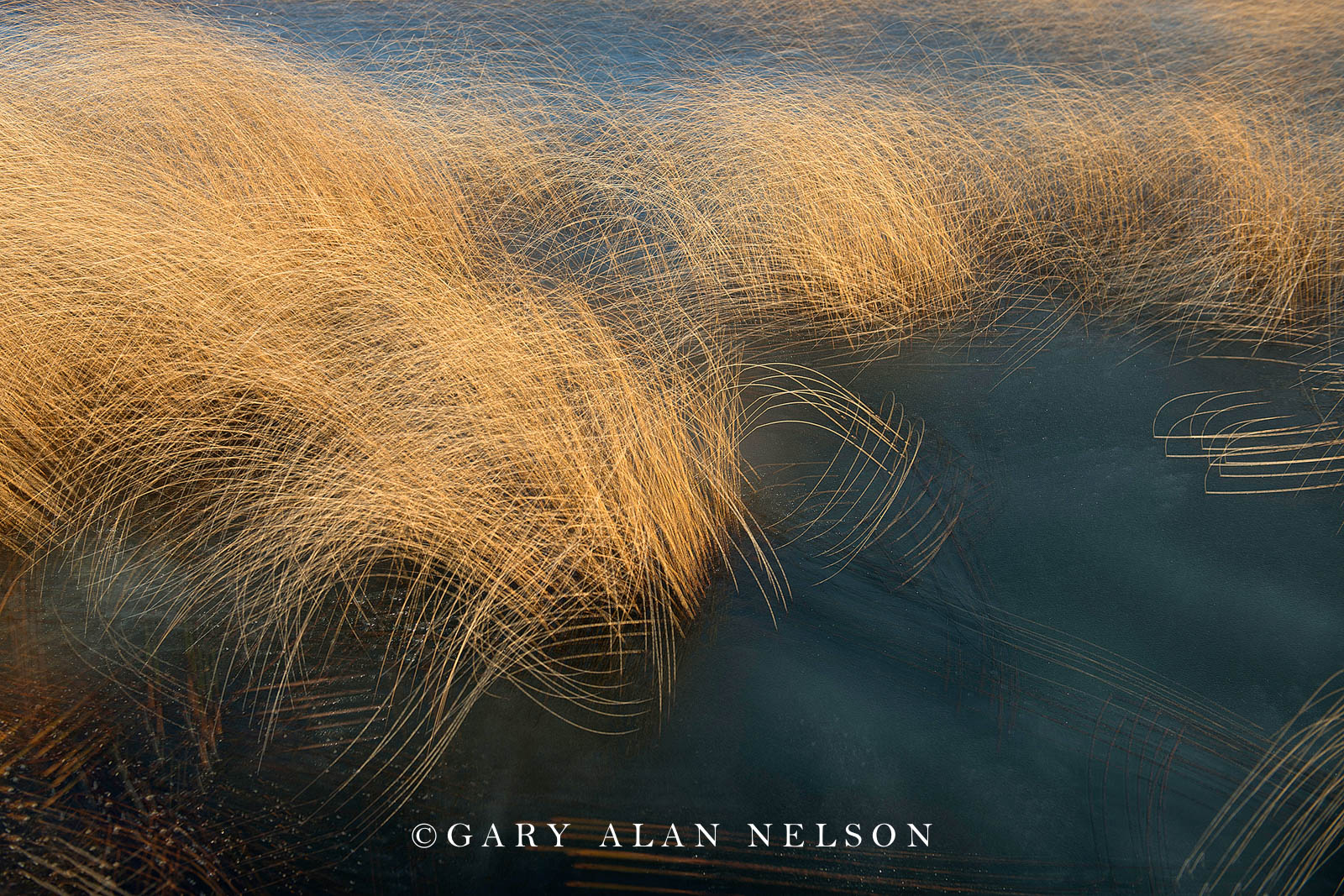 grass, bulrushes, abstract, photo