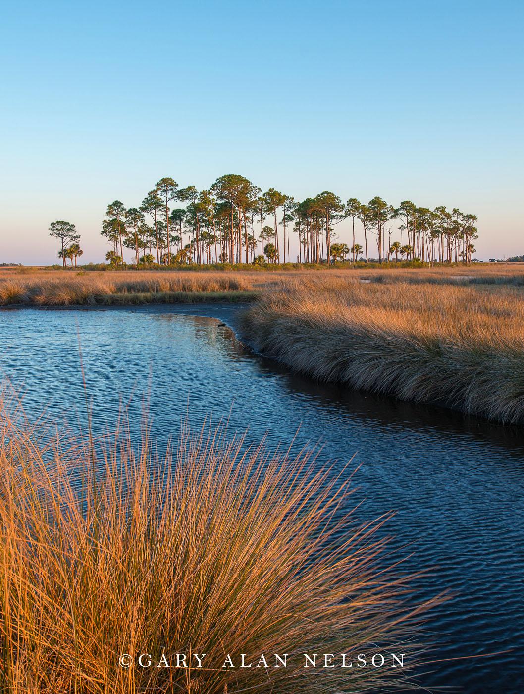 grasses, national wildlife refuge, freshwater marsh, florida, photo