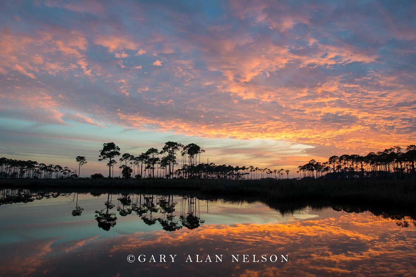 reflections, st. marks national wildlife refuge, silhouettes, photo