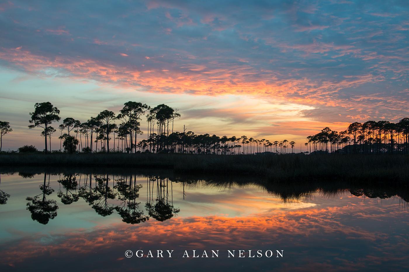 long leaf pines, reflections, sunset, national wildlife refuge, florida, st. marks, photo