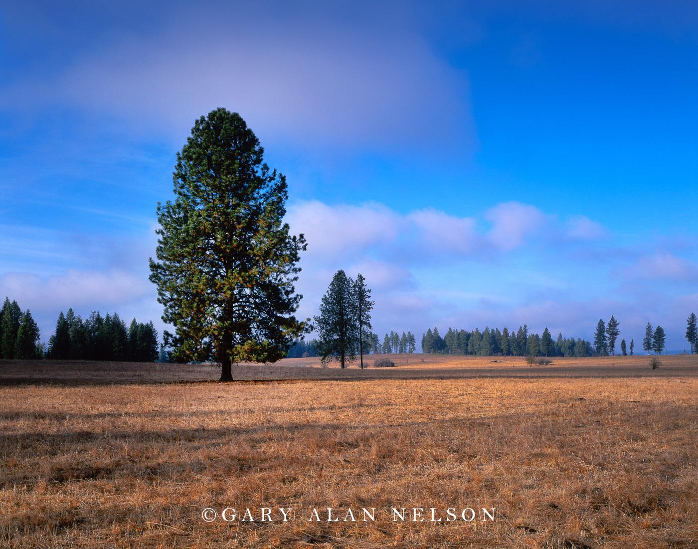Nez Perce National Historic Park, Idaho, lewis and clark national historic trail, photo