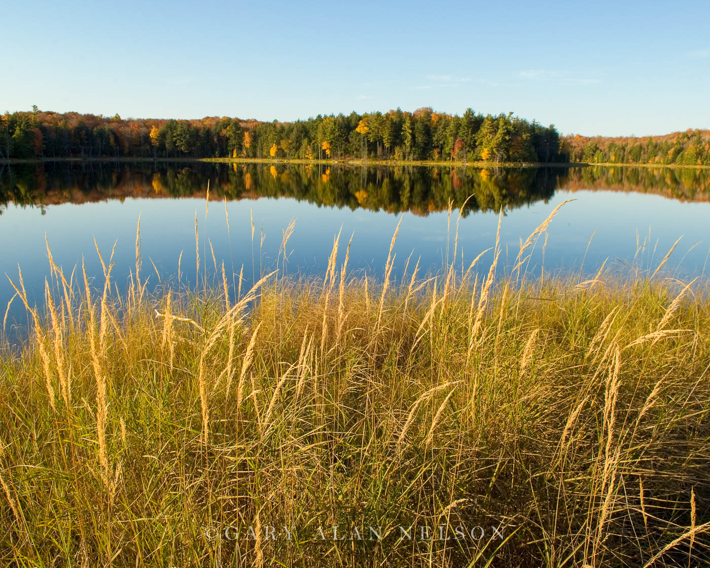 lake, sylvania, grasses, photo