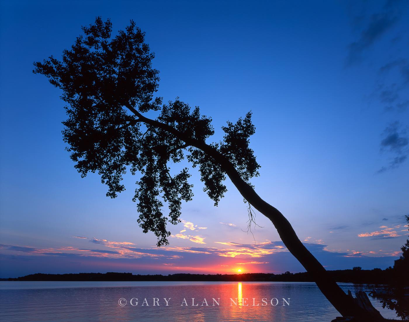 minnesota, lake, tree, photo