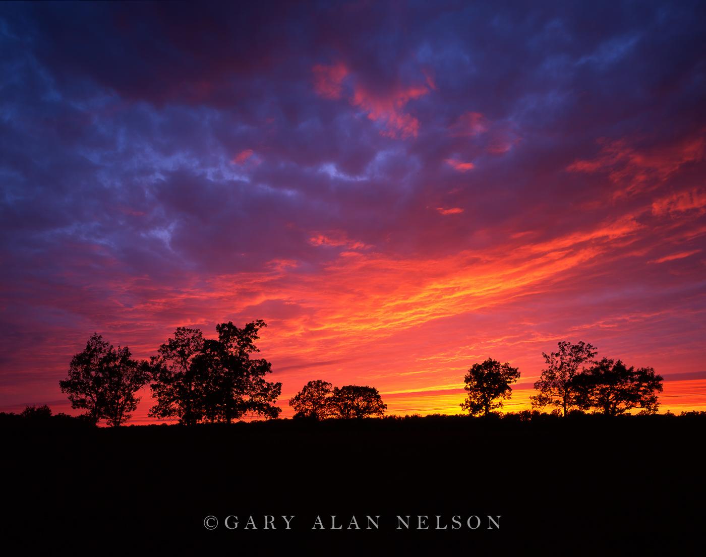 oak savannah, state park, minnesota, photo