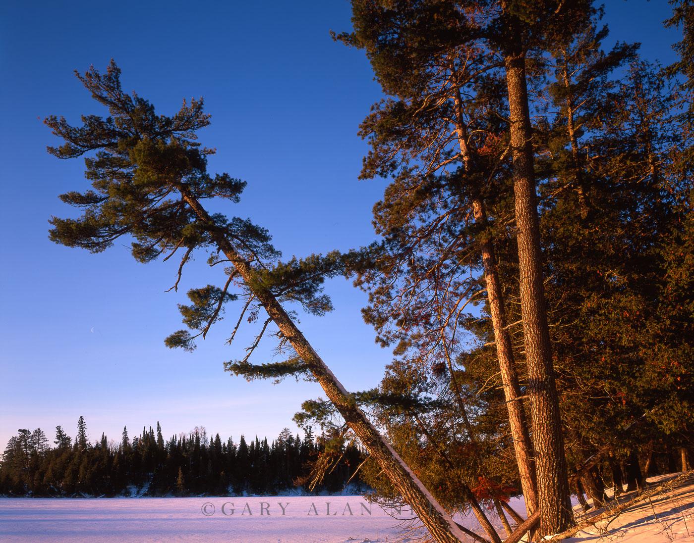 lake, red pines, scenic state park, minnesota, photo
