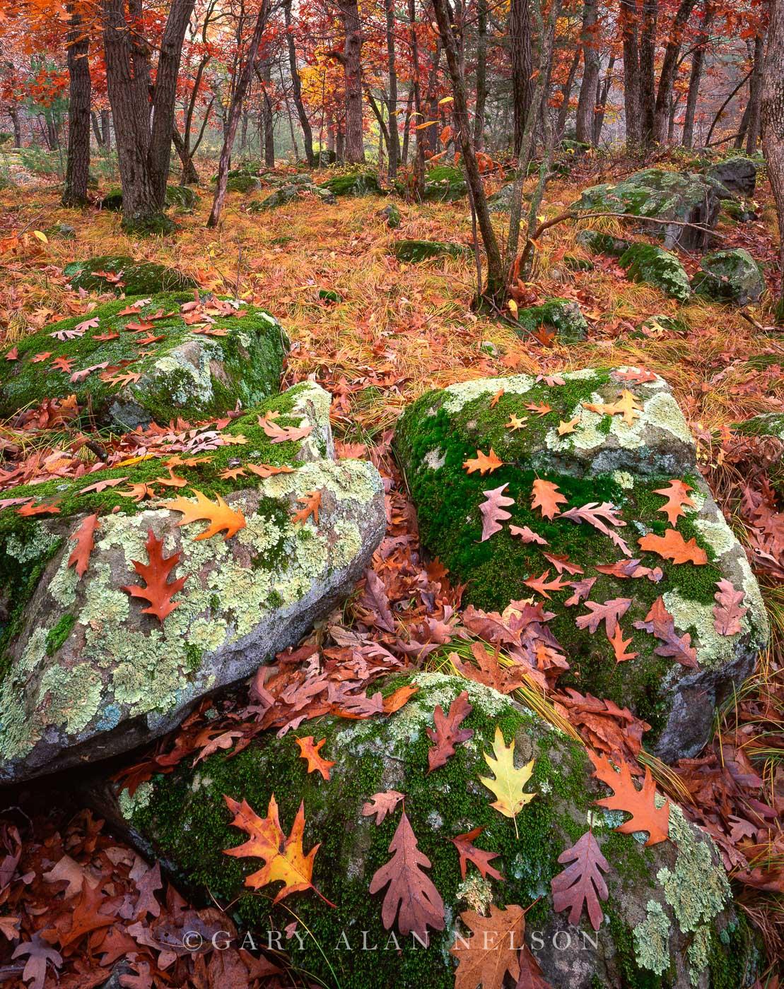 st. croix river, oaks, boulders, photo