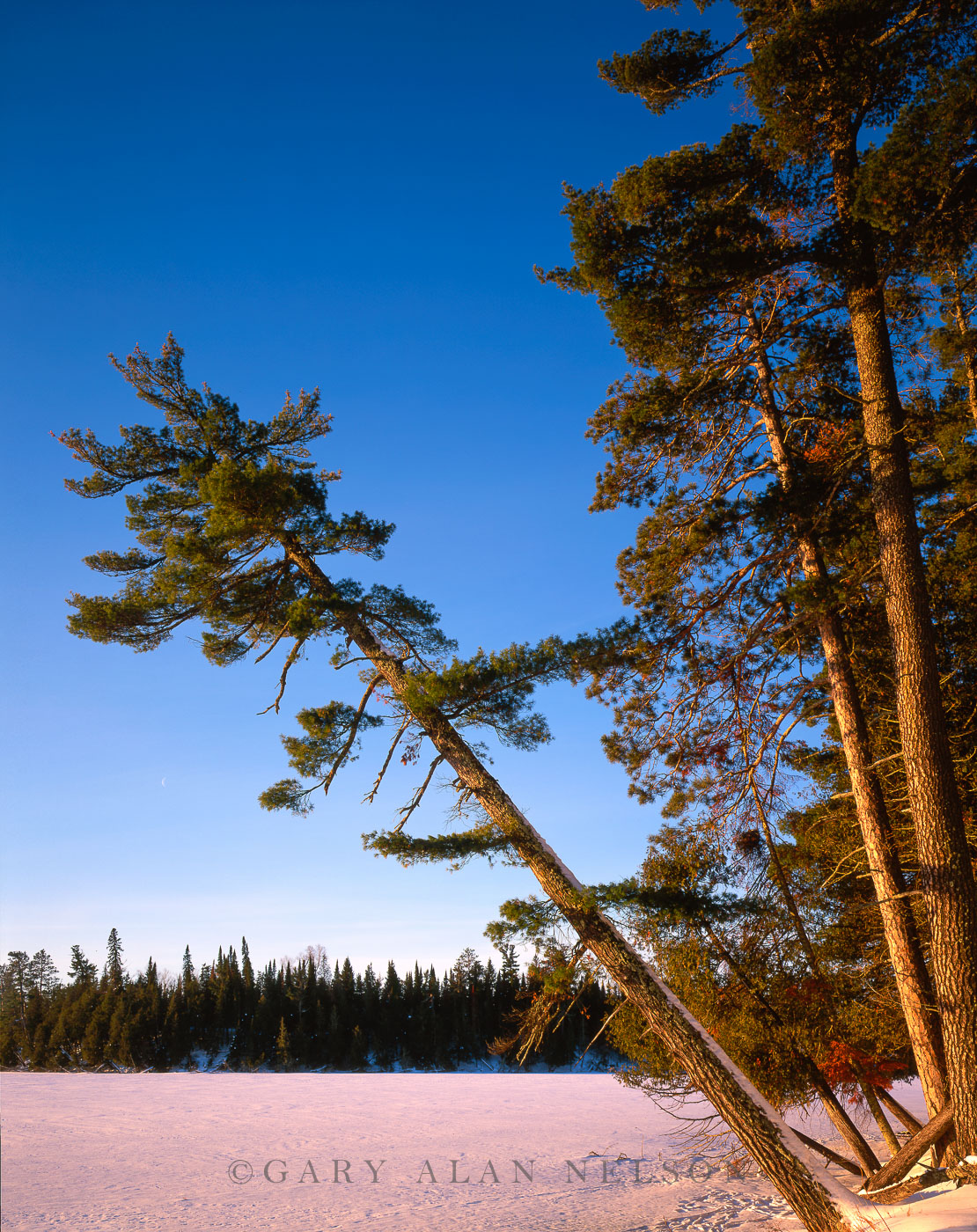 pine, minnesota, state park, minnesota, photo