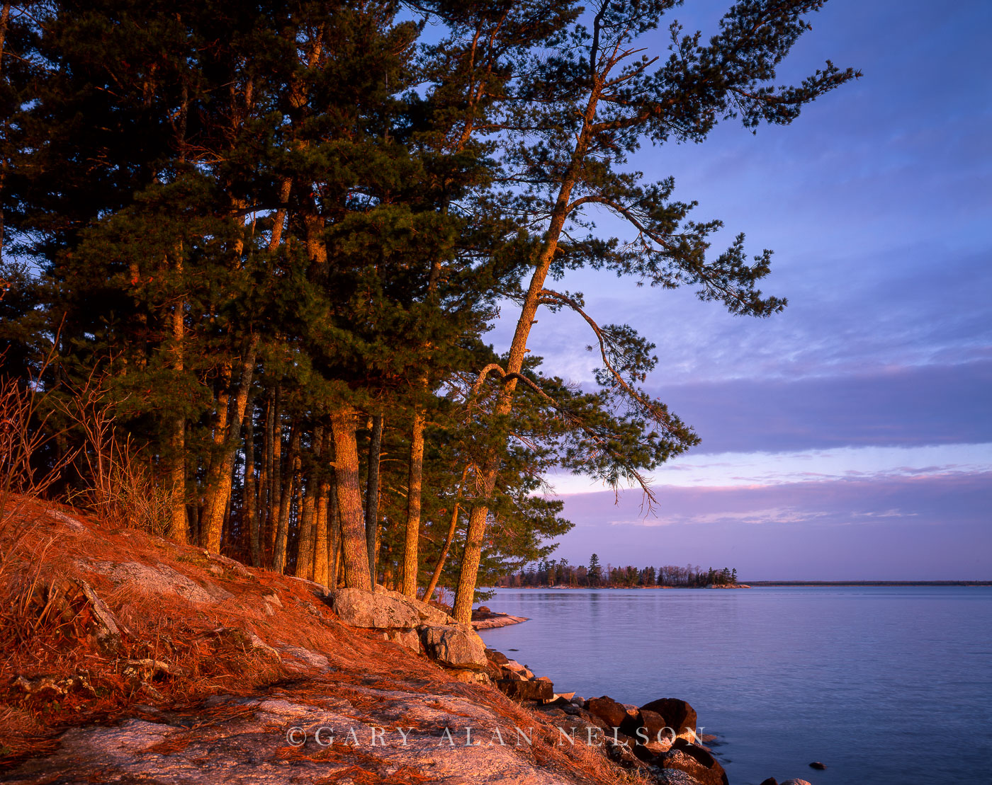 voyageurs national park, minnesota, white pines, photo