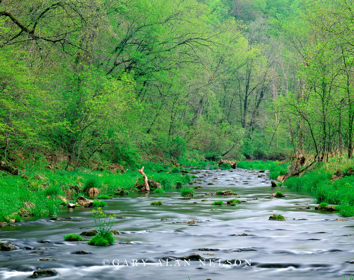 Spring on the Whitewater River | Whitewater State Park