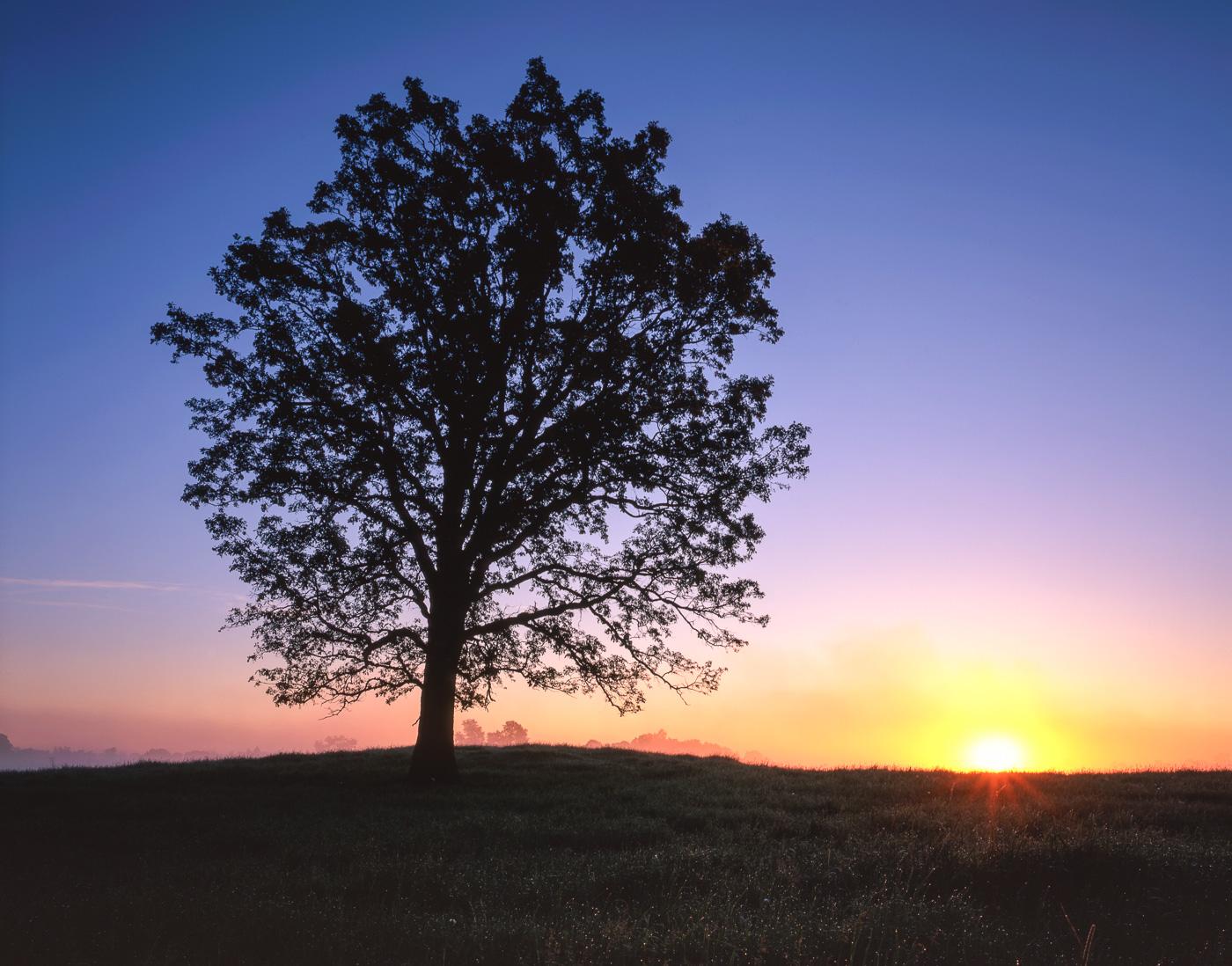 Rising sun and ground fog silhouetting an oak savannah in Central Minnesota