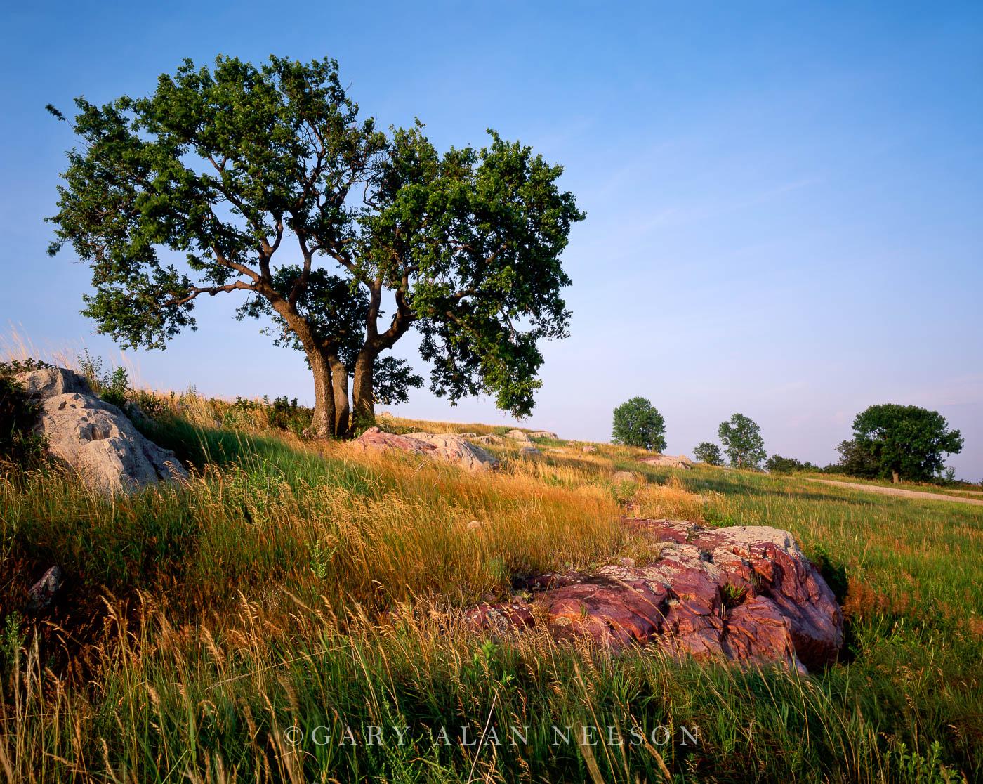 minnesota,prairie,state park, photo