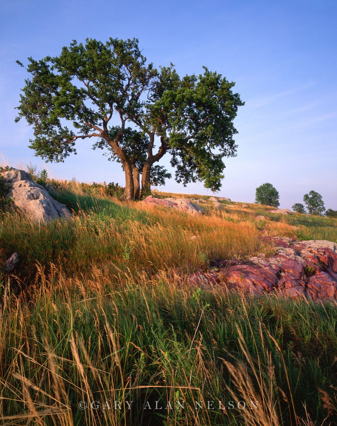 prairie, ash tree, siouz quartzite, minnesota, state park, blue mounds, photo