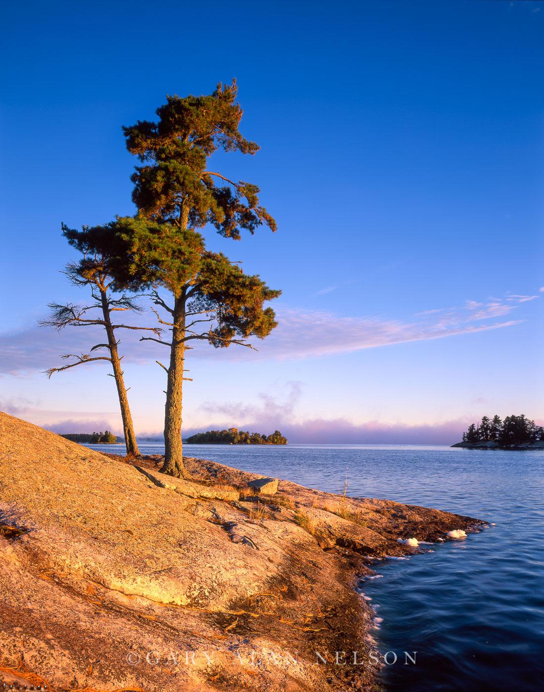voyageurs national park, minnesota, white pine, photo