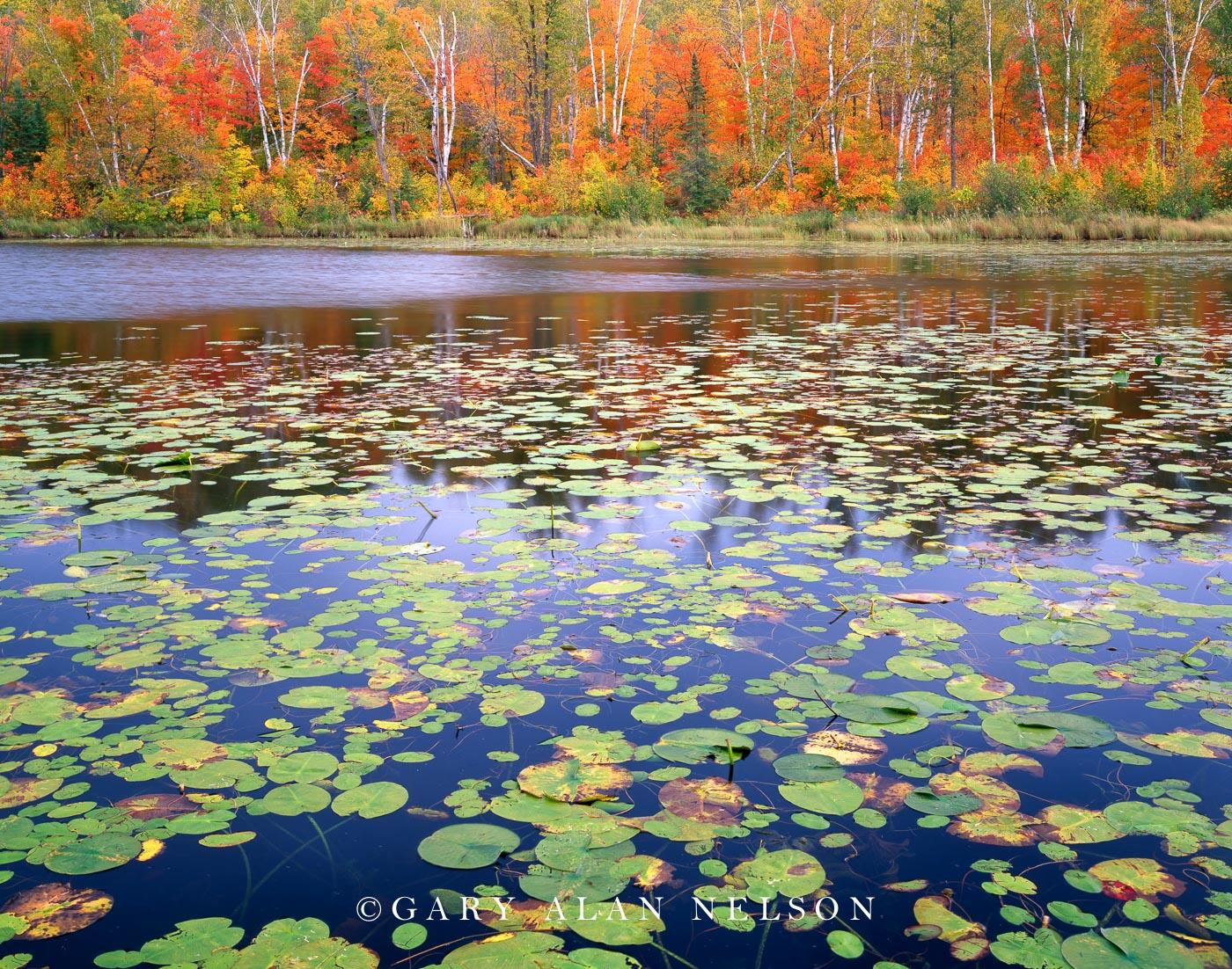 lily pads, autumn, minnesota, chippewa national forest, lake, photo