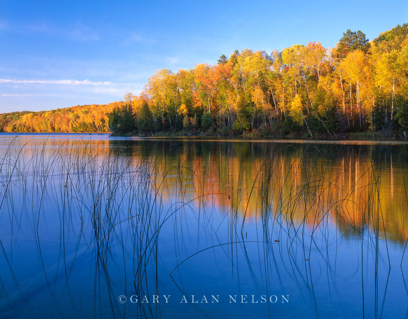 chippewa national forest, minnesota, bulrushes, lake, photo