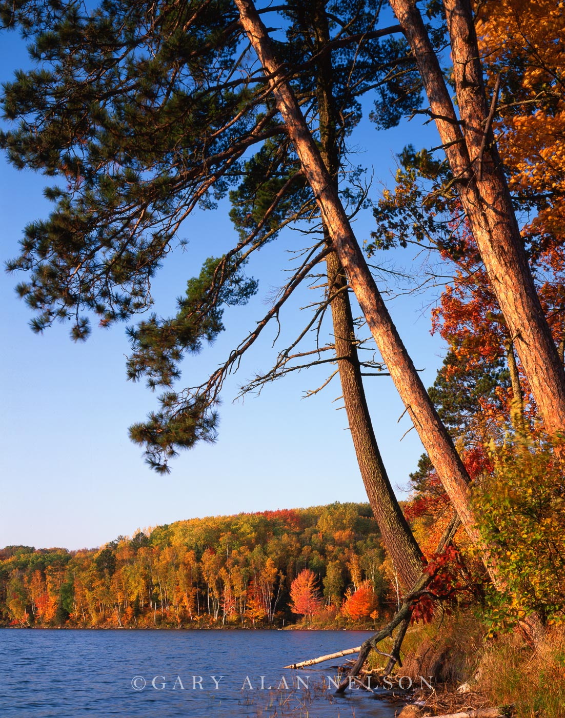 chippewa national forest, lake, minnesota, red pine, photo