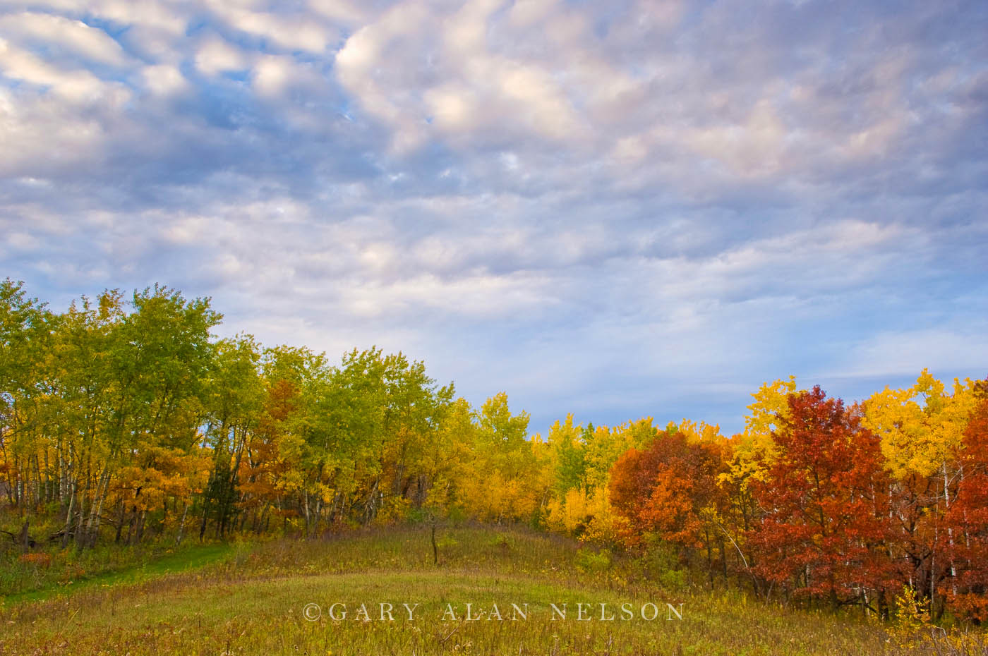 autumn, minnesota, prairie, state park, photo