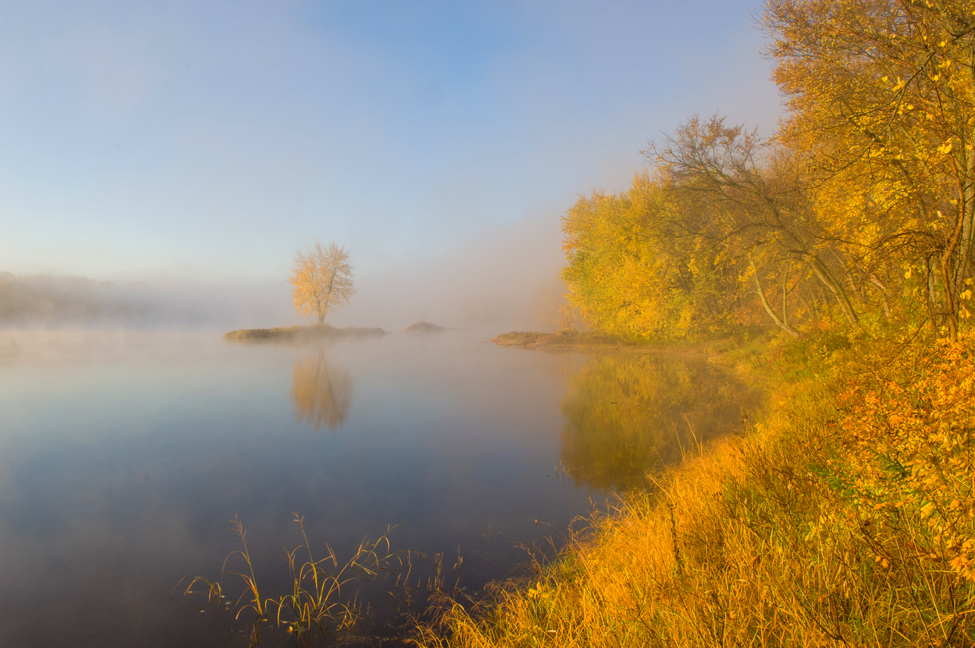 Lone tree in fog along the St. Croix National Scenic River, Interstate State Park, Minnesota/Wisconsin