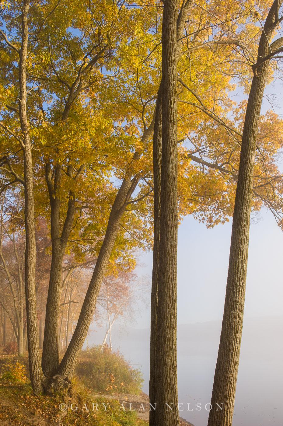 St. croix river, minnesota, wisconsin, fog, interstate state park, photo