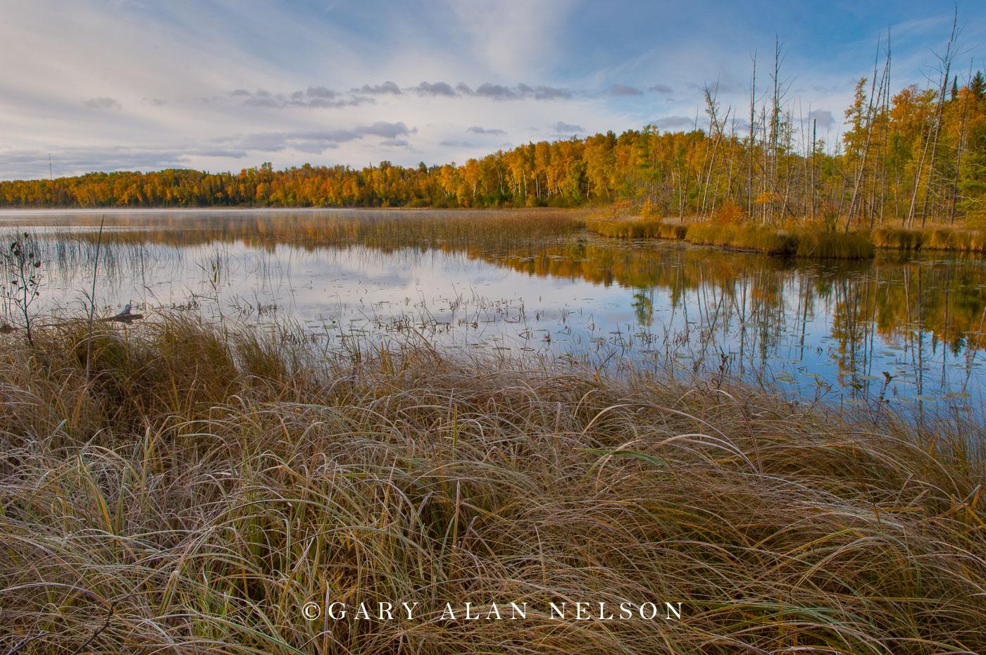 minnesota, national forest, chippewa national forest, lake grasses, sedges, lakeshore, autumn, fall, reflections, photo