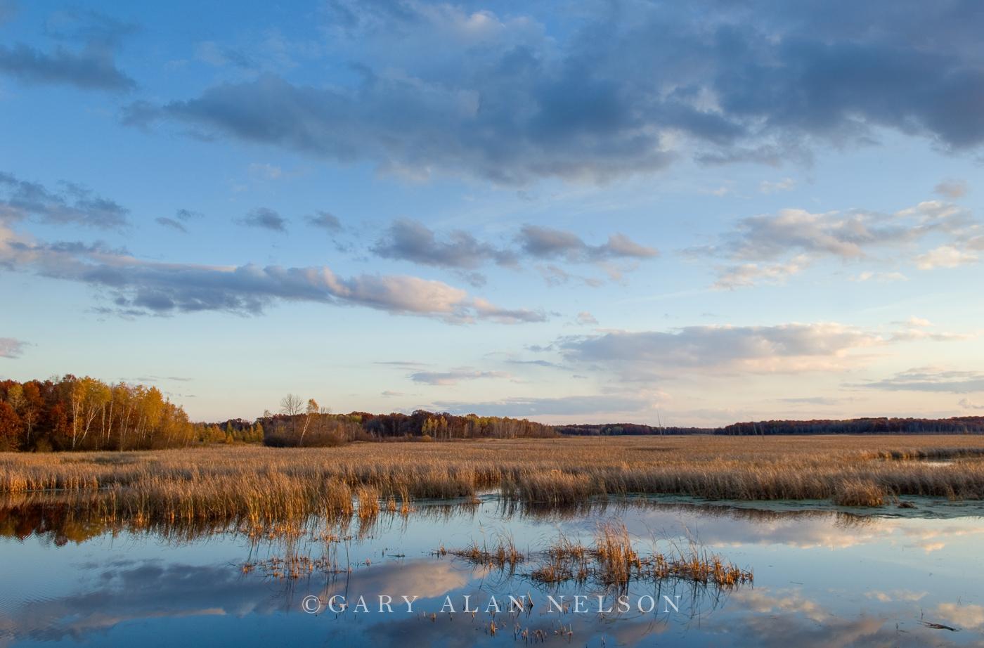 cattail marsh, photo