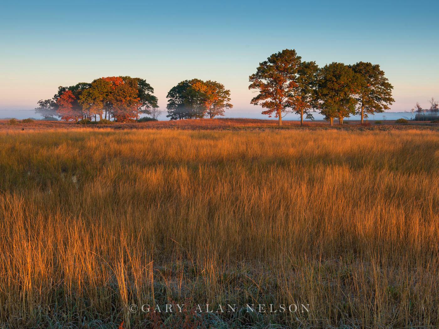 grasses, trees, carlos avery, minnesota, photo